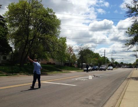Baby ducks cross Dakota Ave