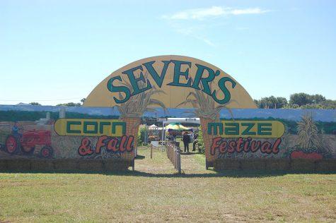 Sever's Corn Maze Fall Festival