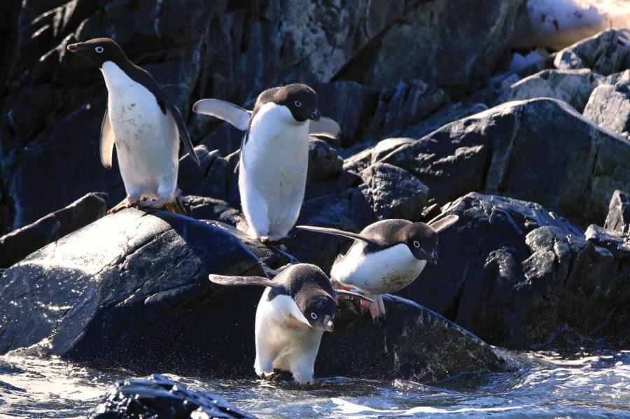 Teacher travels to Antarctica