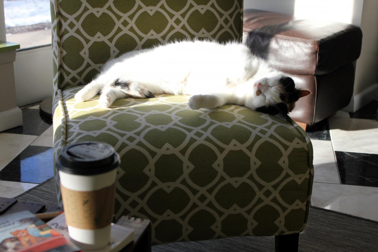Minneapolis First Cat Cafe Opens The Echo