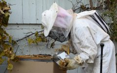 Sophomore explores beekeeping
