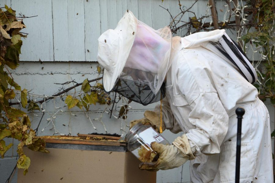 Equipped+with+a+metal+scraper%2C+Franklin+meticulously+cleans+the+surface+of+the+hive+careful+to+avoid+disturbing+the+bees.