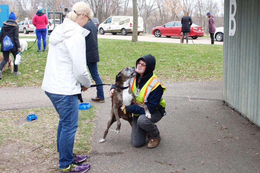 Volunteer+kneels+down+to+greet+excited+dog+and+is+embraced+with+a+lick+on+her+face.+Interacting+with+dogs+proved+to+be+yet+another+fun+activity+for+visitors+to+take+part+in+at+the+Minnesota+Landscape+Arboretum.