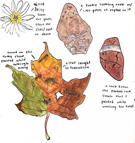 This image is an example of lightly annotated phenology drawings by Claire Bargman. Phenology journaling is a way to thoroughly observe your surroundings as the seasons change.