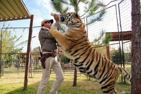 "Fair use from Netflix. Joe Exotic, star of ""Tiger King: Murder, Mayhem and Madness,"" feeds a tiger. The eighth episode of the Netflix series was released April 12."