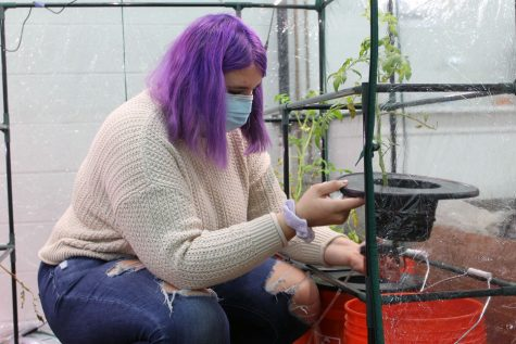 Senior Liz Hodges is a part of the SLP Seed Hydroponics team. Once a week, the team checks on their green houses where the plants are grown and makes any improvements to their environment.
