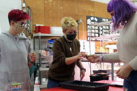 Seniors Zoe Frank, Audrey Long and Liz Hodges working at Seeds Feeds Oct. 24, 2020. The organization seeks to cultivate sustainable agriculture and eliminate hunger in St. Louis Park.