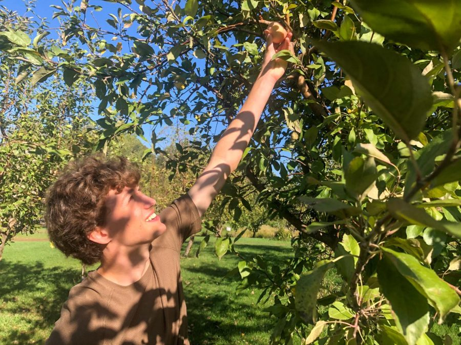 Organic Breezy Hill: an exquisite orchard